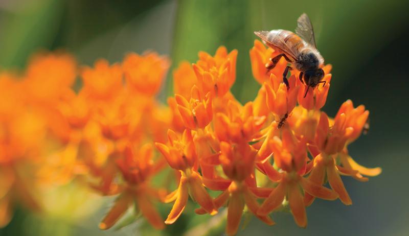 start beekeeping
