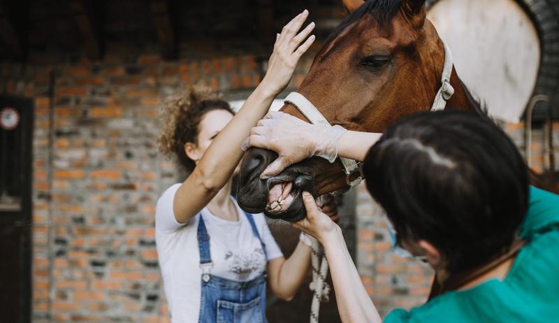horse animal medication animals medications