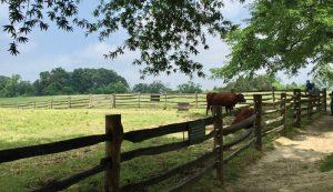 founding farmers fathers presidents farming farmed
