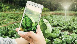 farm digital content social media marketing online
