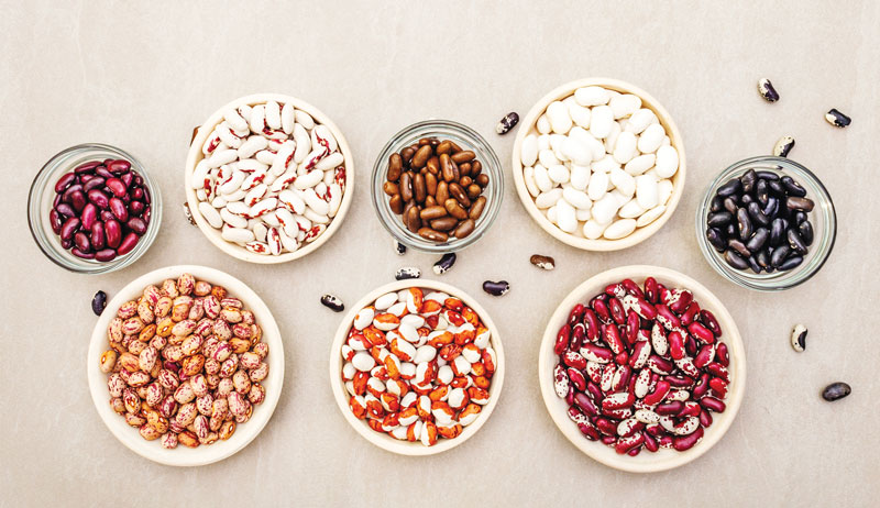 dried beans in bowls growing