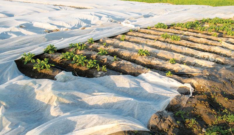 row covers greens