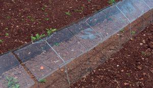 microclimates shade cloth