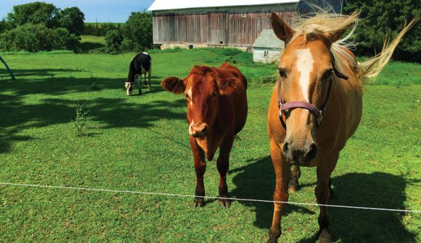 What You Should Know Before Buying Your First Horse