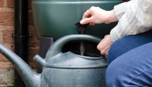 rainwater collection rain barrel