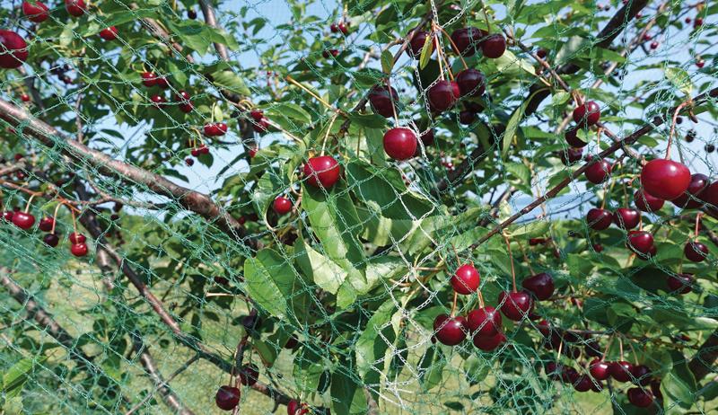 fruit nut trees tree orchard plant planting