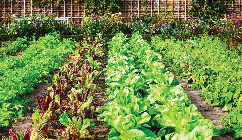 succession planting garden gardening