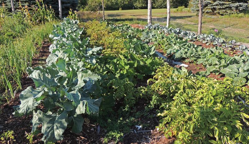 probiotic farming biointensive agriculture