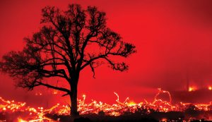chickens chicken wildfire wildfires fire fires