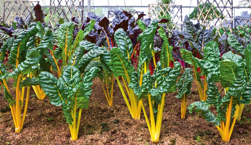 quick-growing vegetables