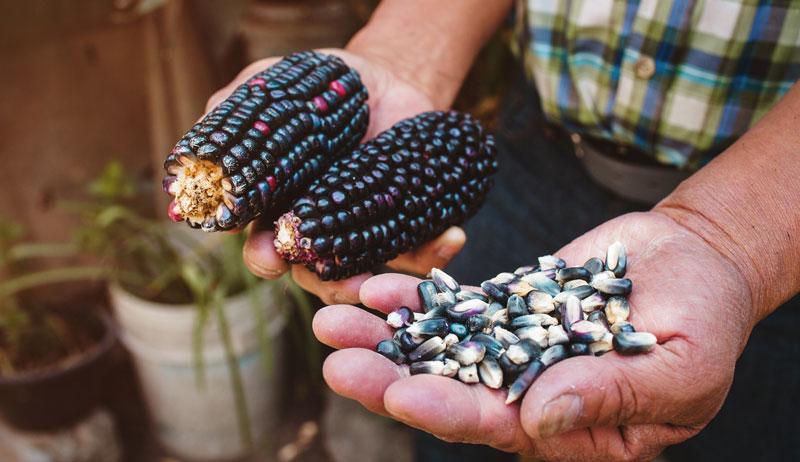 storage corn