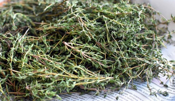 From The Herb Garden:Thyme Is Terrific!