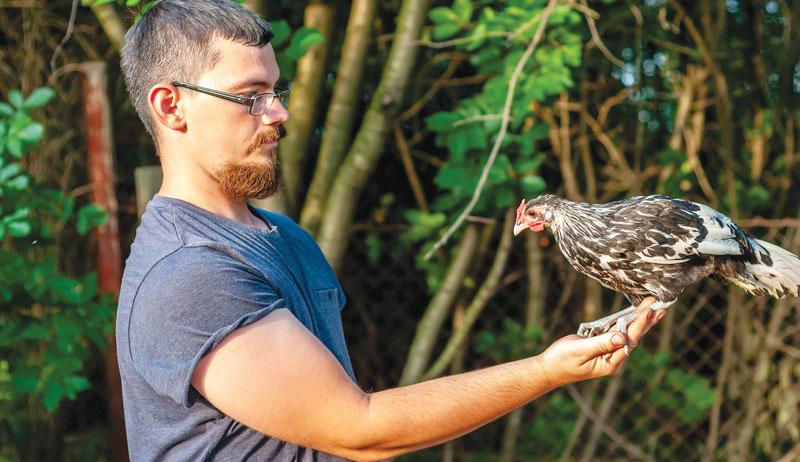chicken training