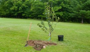 planting trees tools