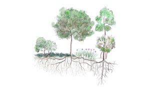 ecosystem design