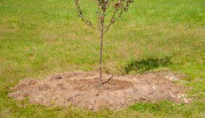 trees raised ground