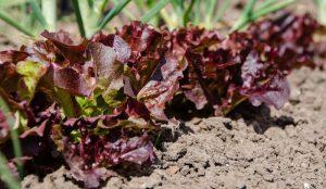 garden soil fertility