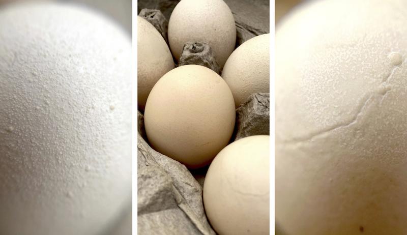 eggshell hens health weird shells odd