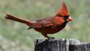 bird deaths birds dying