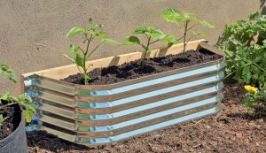 window well raised bed Gardening Your Front Yard
