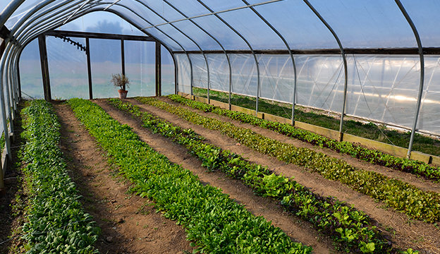 Grow Span Cold Frame, season extender, Hoop House