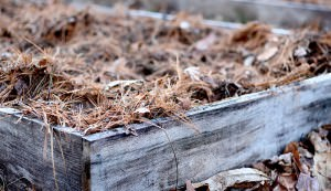 mulch in a raised bed