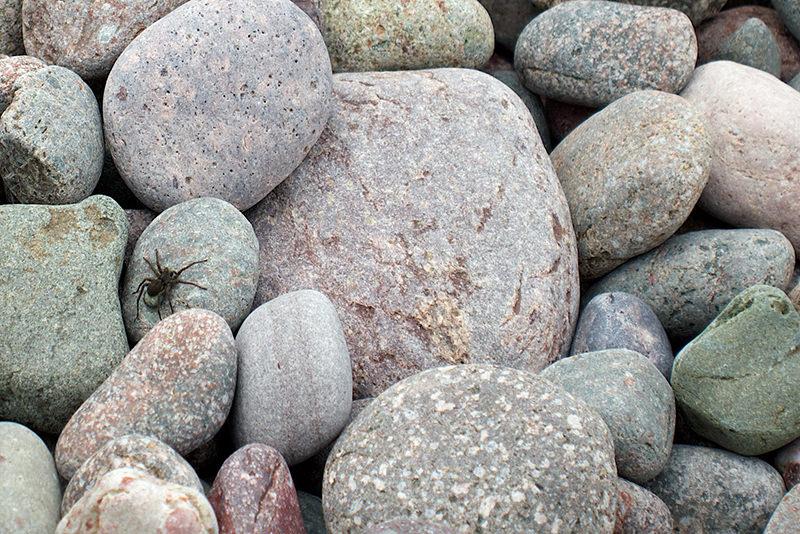 spider on rocks