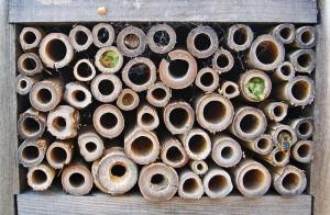 natural tubes