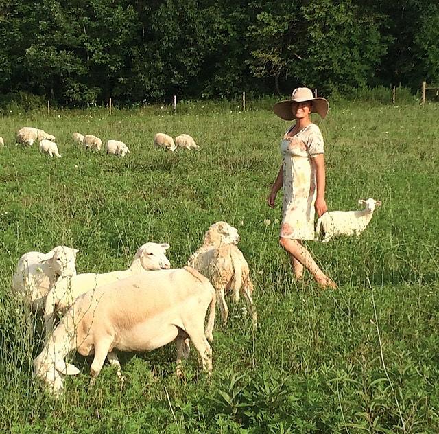 grassfed sheep