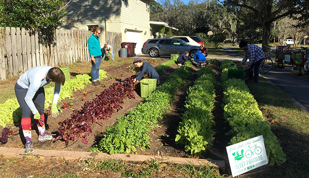 Fleet Farming uses the SPIN method of gardening, growing greens and microgreens in small intensive plots.