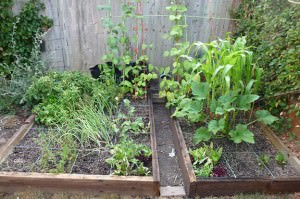 square-foot garden