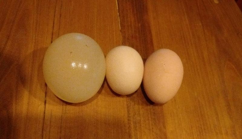 an egg inside an egg