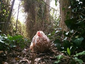 Mumble The Chicken