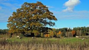 pasture trees