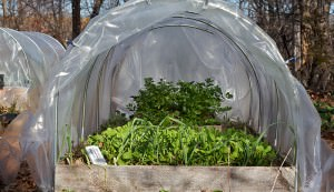 low tunnels