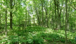 farming medicinals in the forest