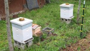 dead beehive