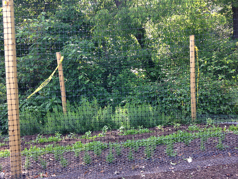 Keeping Deer Out Of Your Garden, How To Keep Deer Out Of Veggie Garden