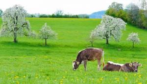 spring grazing