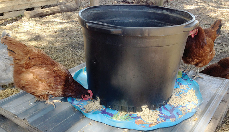 nursery pot as chicken feeder