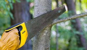 tree-trimming equipment