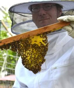 top bar hive