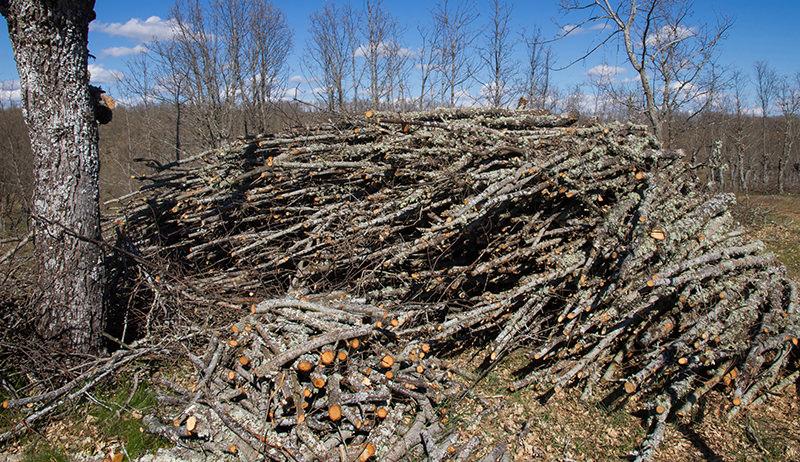 tree prunings