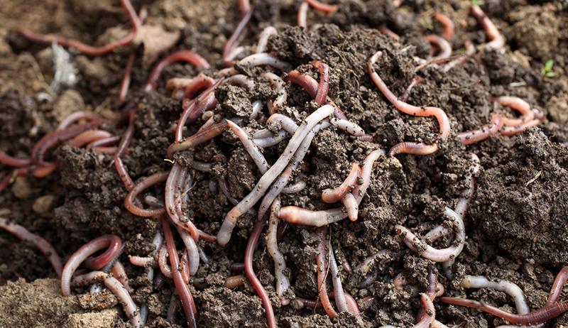 vermicomposting worm bin