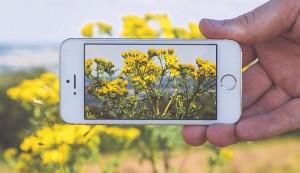 smartphone camera wildflowers