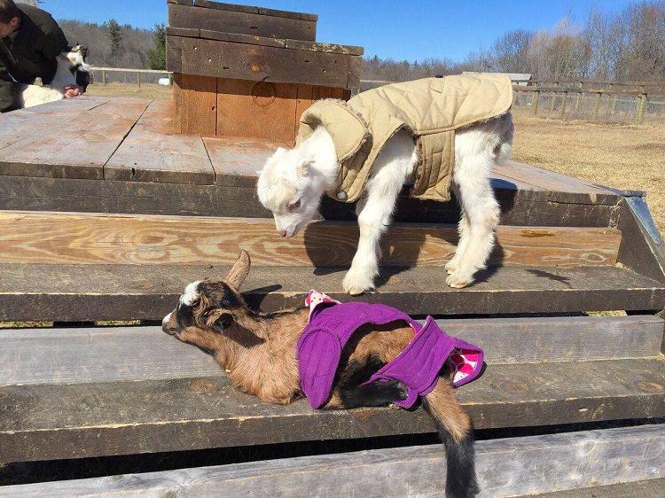 Woodstock Farm Sanctuary/Facebook