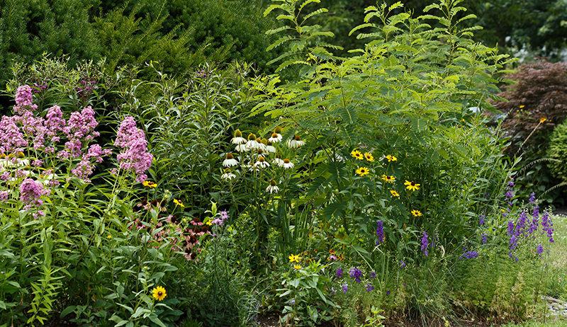edible rain garden
