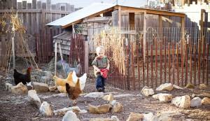 child feeding chickens