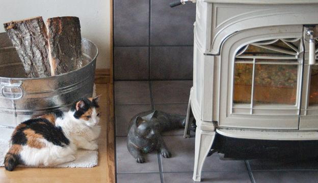woodstove, cat, wood