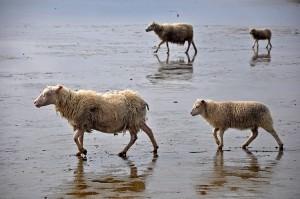 animals on spring break